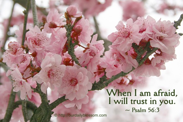 Enjoy Today And Enjoy Life Quotes And Background Wallpaper Bible Verse Psalm 56 3 Our Daily Blossom