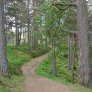 Scotland: Aviemore