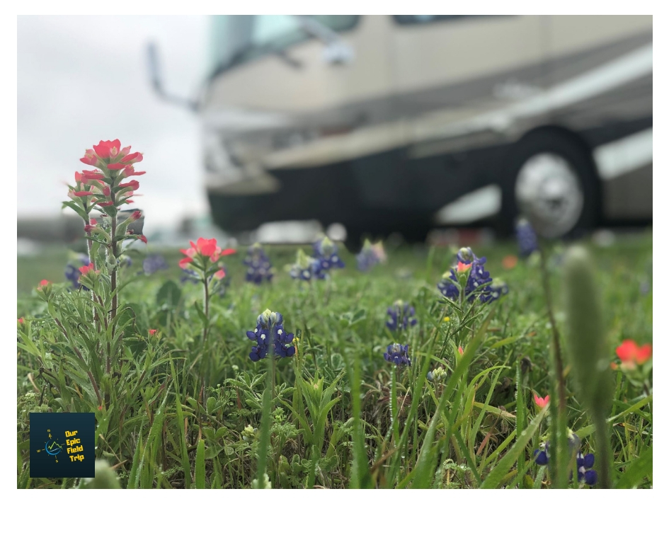 Motorhome with bluebonnets