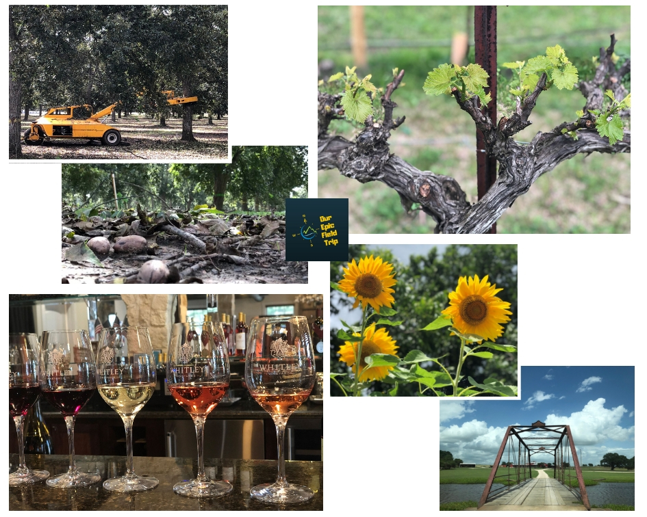 small towns in texas - scenes from pecan harvest and wineries