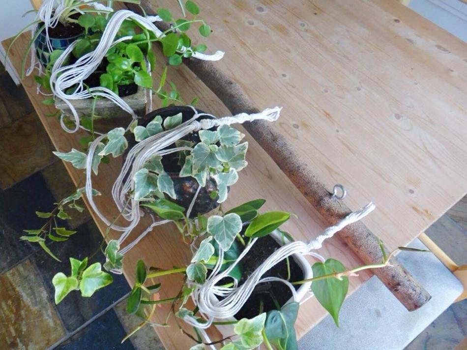 Branch Macrame Plant Hanger DIY (16)