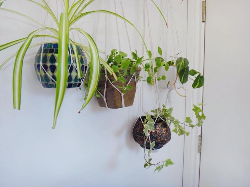 Branch Macrame Plant Hanger DIY (8)