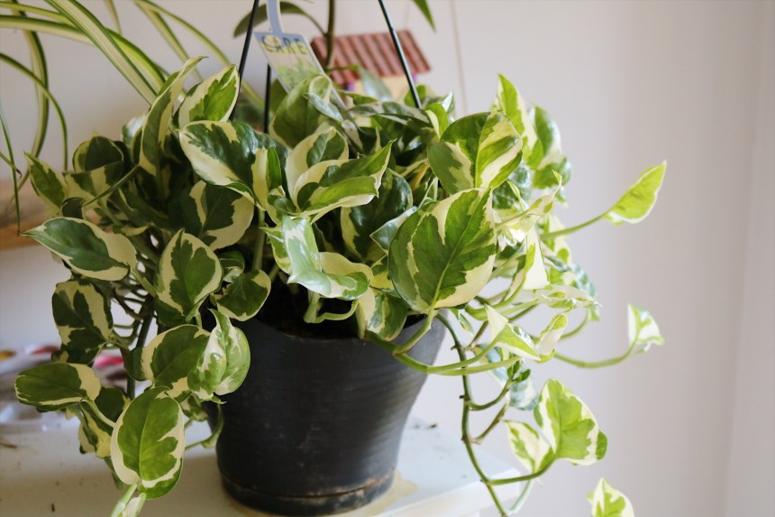 Indoor Plants Urban Jungle (9)