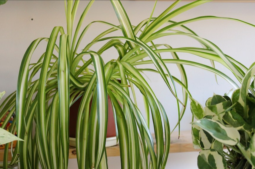 Indoor Plants Urban Jungle (7)
