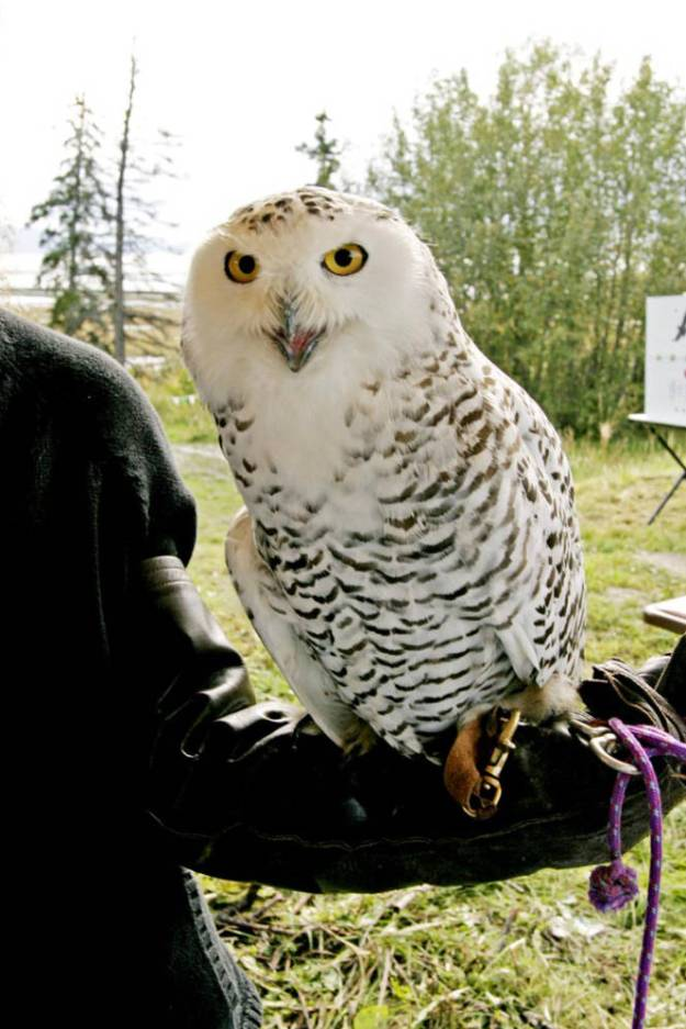 Owls In East Tennessee : tennessee, Feathered, Friends