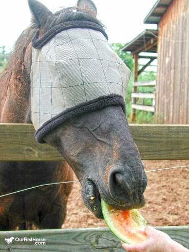 Horse eating watermelon