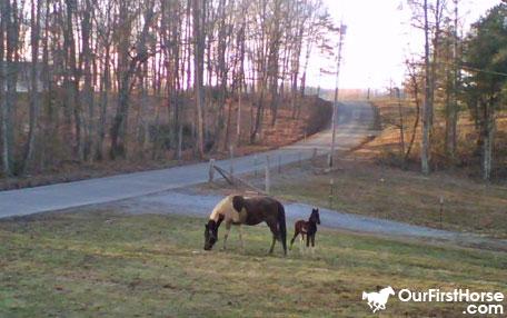 Stray Horses