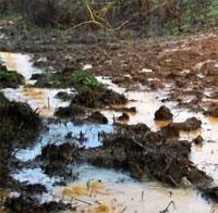 Pasture Mud