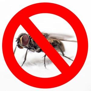 No to flies!