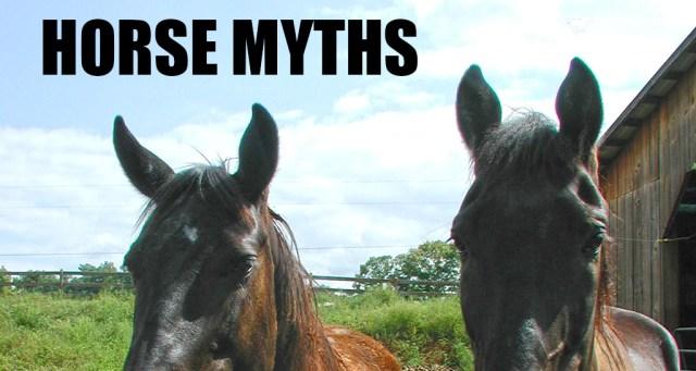 Horse myths