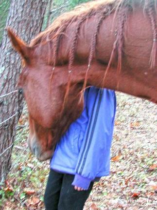 Pushy horse