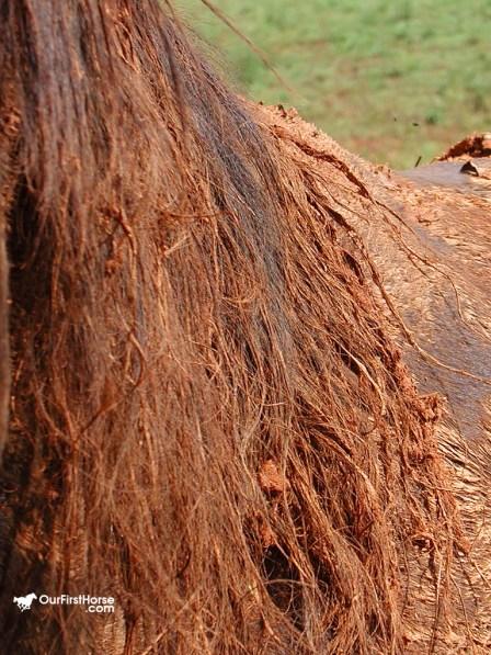 Redhead horse