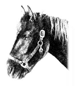 Valentine profile drawing