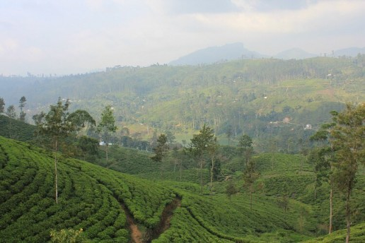 Sri Lanka - Hidden Gems of Family Travel   OurGlobetrotters.Com