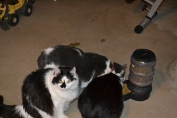 Still healthy and living in our basement with her brothers, Charlie and Linus.