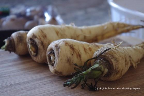roasted mushroom and parsnip ravioli 1 2013