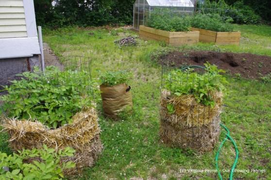 Garden progress 10 2013