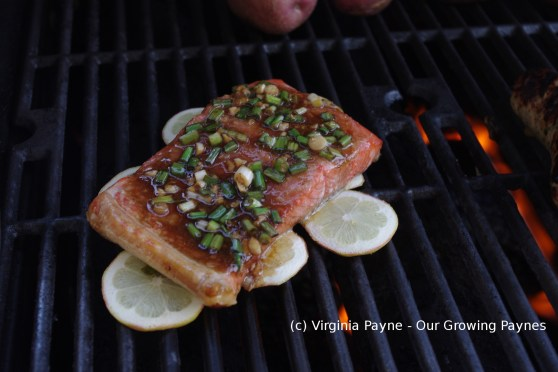 Asian salmon 4 2014