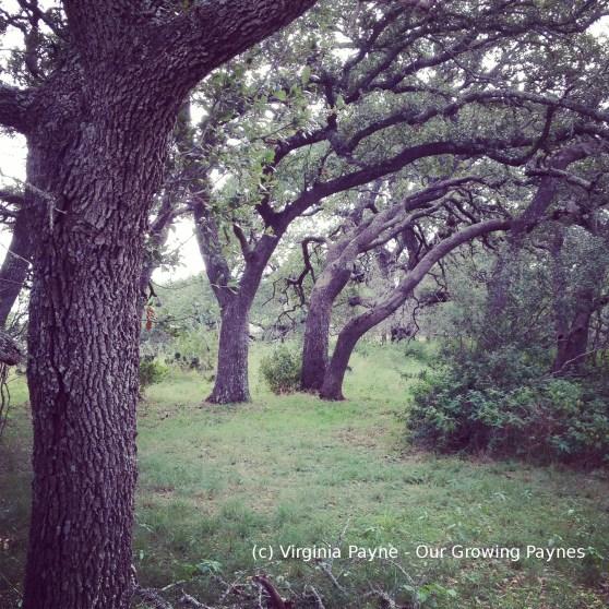 Texas Fun 2 2014