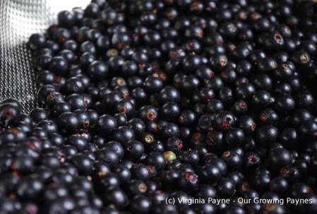 Black currant jam 1 2015