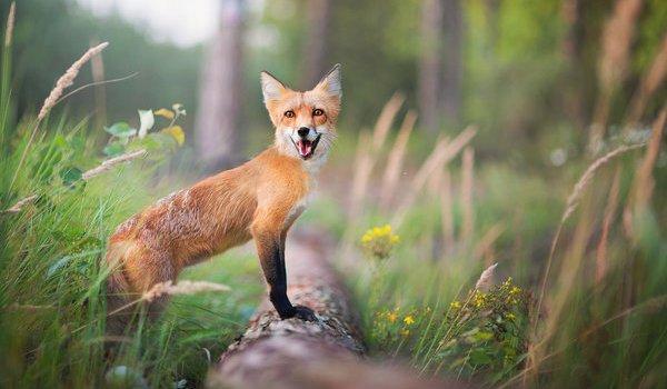 Звернення щодо удосконалення мисливського господарства та полювання