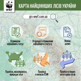 Відтепер кожен може дізнатися всю актуальну інформацію щодо пралісів та інших цінних лісів України!