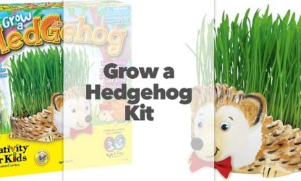Grow a Hedgehog Kit