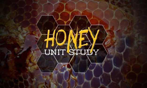 A Honey of a Unit Study