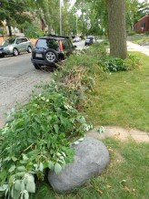shrubs removed from front yard 8/29/15 weekend