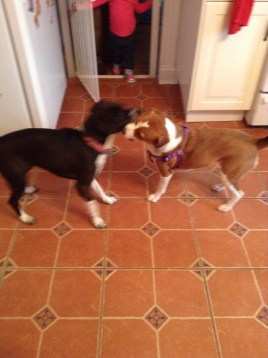 Bella having a litle play time with her cousin Ladybird