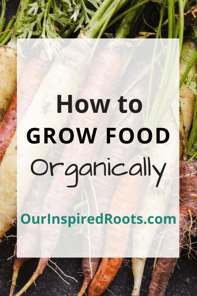 Want to start organic gardening? Find out how to easily begin your own organic garden and start growing your own food this year! #organicgarden #gardening