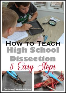 How To Teach High School Dissection
