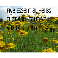 Five Essential Herbs that Will Calm Your Anxious Child