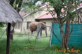 Special Kruger Garden Services