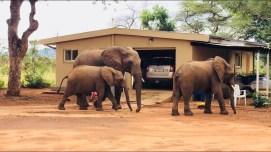 Home Alone Living in Kruger