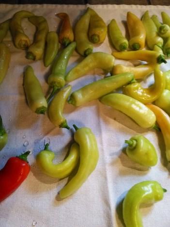 banana peppers on towel