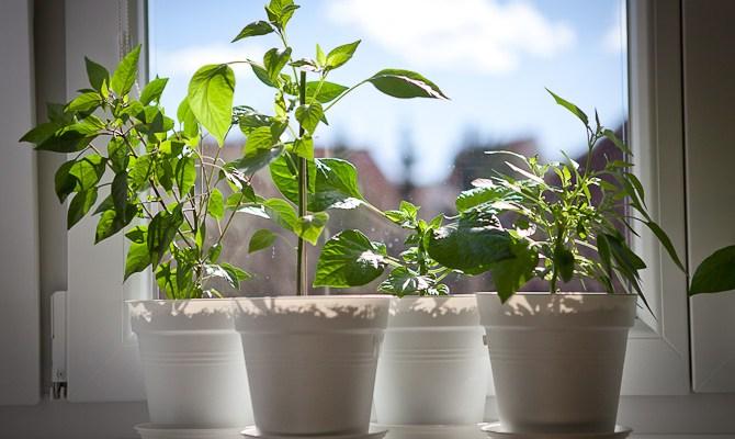 Grow One Pot …