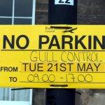 Gull Control Dunbar - No Parking