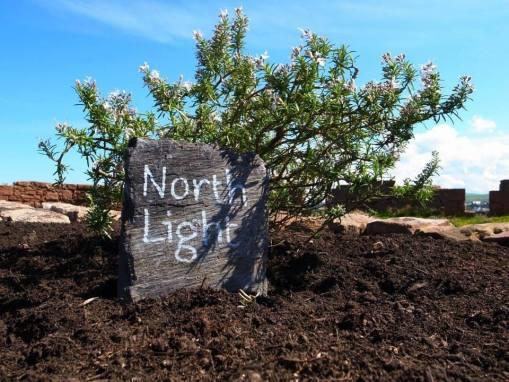 North Light Arts