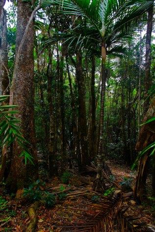 Après 3h de marche, premiers pas dans la forêt humide