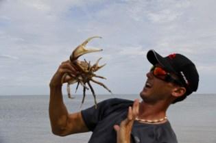 L'attaque du crabe du Banian