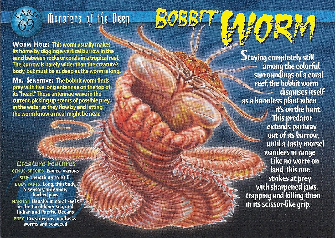 Bobbit Worm Characteristics Information Habits And More