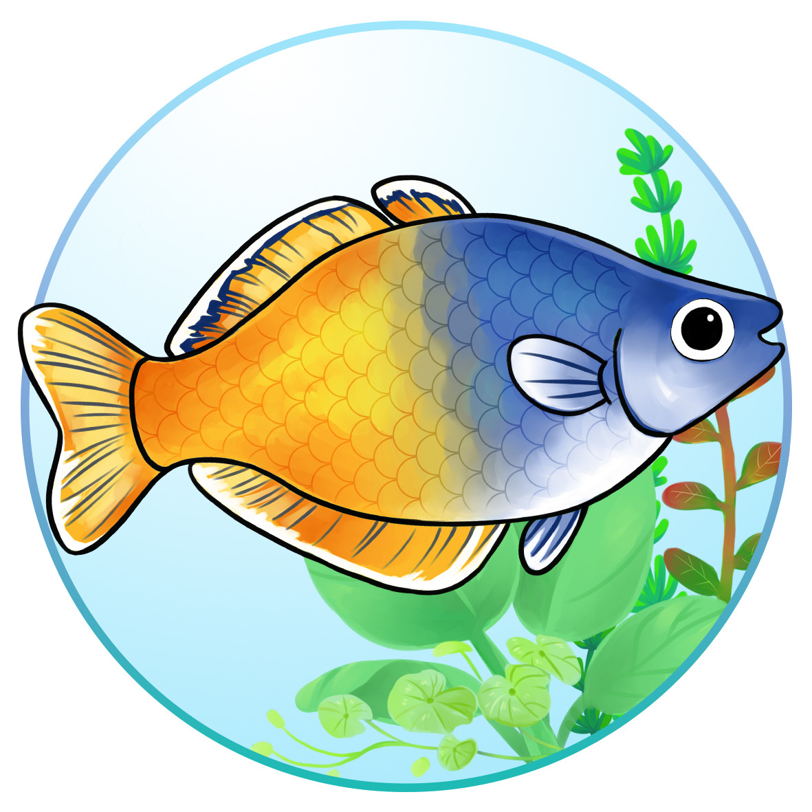 Boeseman S Rainbowfish Characteristics Habitat