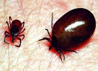 स्क्रब टायफस , Nagpur Under Grips of Scrub Typhus