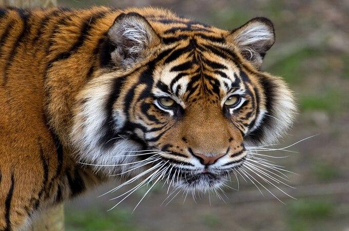 राज्यात ६ वर्षांच्या काळात वन्यप्राण्यांच्या मिळून ७२४ शिकारी, मात्र गुन्हे नोंदविले गेले फक्त २२