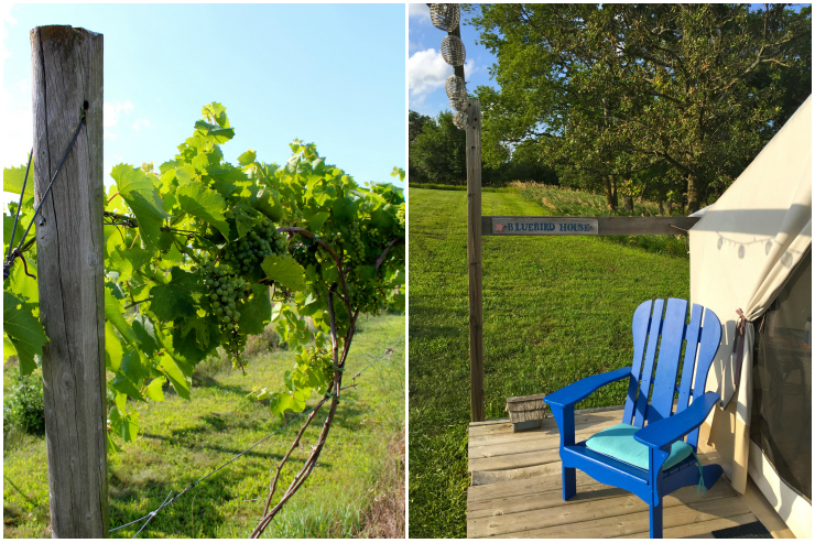 Vineyard Glamping at Slattery Vintage Estates near Omaha, Nebraska | ournextadventure.co