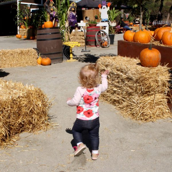 Fall Fun at Lemos Farm in Half Moon Bay, CA, a quick day trip from the San Francisco Bay Area | ournextadventure.co