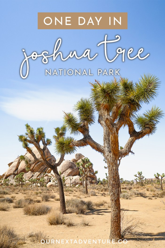 Plan a one day trip in Joshua Tree National Park with this beginner's guide to the best sites and easy hikes, plus tips for planning your day and what to pack. #joshuatree #nps #california #familytravel #findyourpark // Family Travel   Joshua Tree NP   One Day Itinerary   Palm Springs Day Trip   What to See   Easy Hikes   Top Sites   Best Trails   Joshua Tree with Kids   Best Time to Go   Best National Parks   Top Places in California