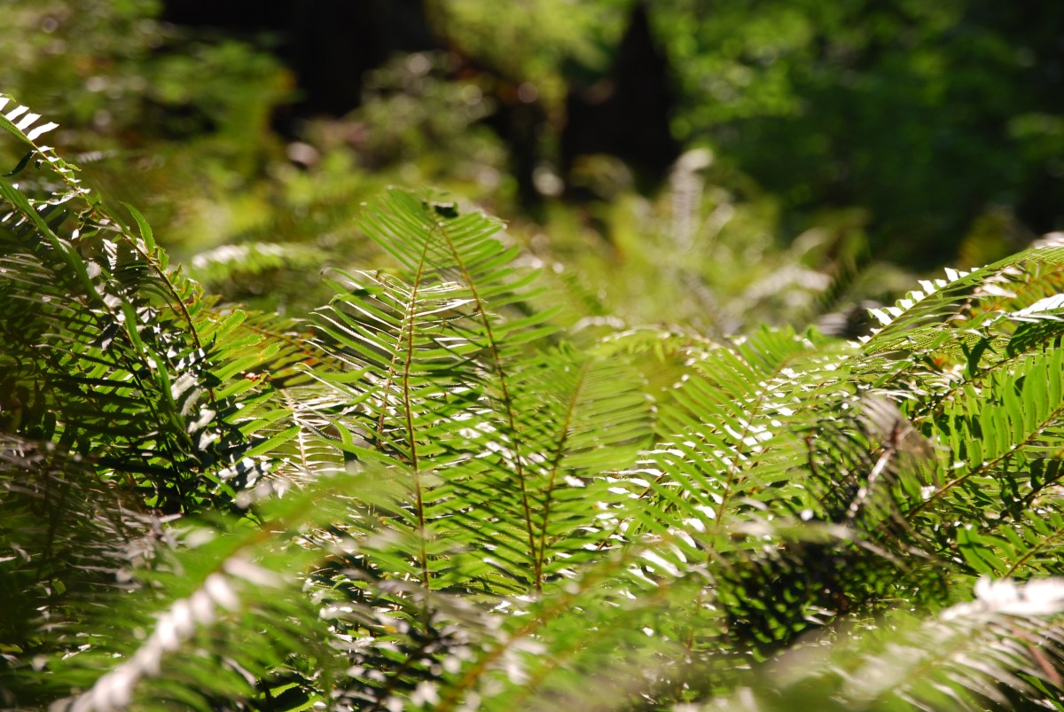 OurNextLife.com // Early Retirement, Financial Indpendence, Adventure -- Green Ferns header photo
