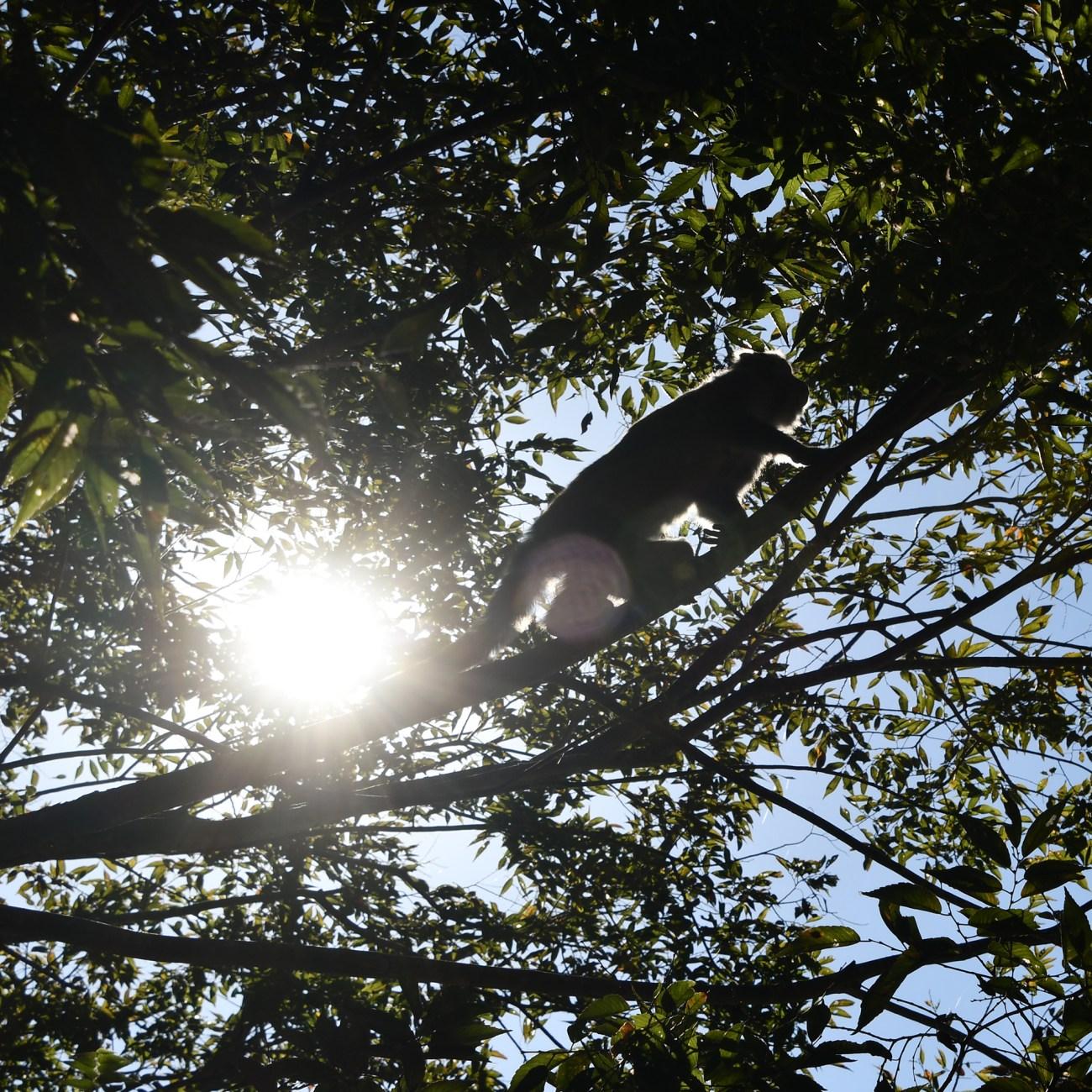 Taroko-Monkey-Tree